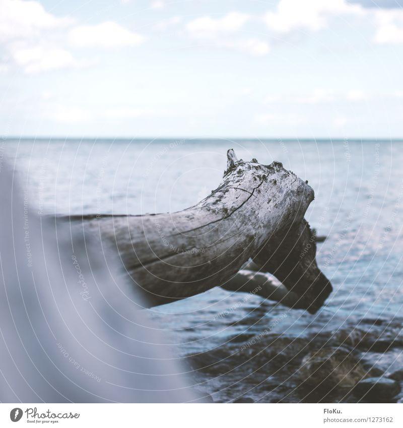 Natürliches Sprungbrett Himmel Natur Ferien & Urlaub & Reisen blau Pflanze Baum Meer Wolken Strand Umwelt natürlich Küste Horizont Tourismus Luft Wellen