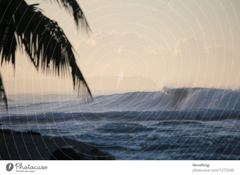 Mentawai Sunrise Natur Pflanze Wasser Sonne Meer Landschaft Ferne Strand Wald Küste Glück Freiheit Stimmung Sand Horizont Zufriedenheit