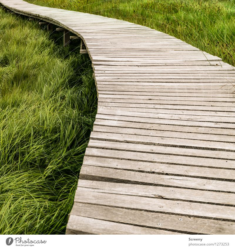 Schwungvoll Natur Ferien & Urlaub & Reisen Pflanze grün Sommer Landschaft Wiese Wege & Pfade Gras Holz braun Tourismus wandern Ausflug Schneidebrett geschwungen