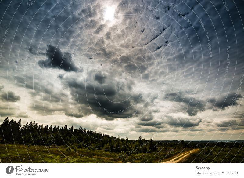 Bedrohlich Himmel Natur Ferien & Urlaub & Reisen Pflanze Sommer Baum Landschaft Wolken Ferne Wiese Wege & Pfade Gras Tourismus Wetter wandern Sträucher
