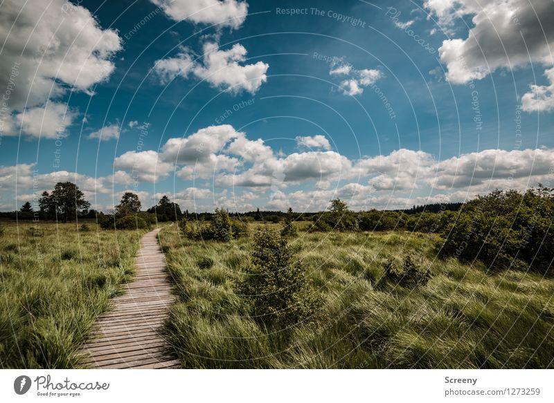 Hohes Venn Himmel Natur Ferien & Urlaub & Reisen blau Pflanze grün Sommer weiß Baum Landschaft ruhig Wolken Ferne Wiese Wege & Pfade Gras
