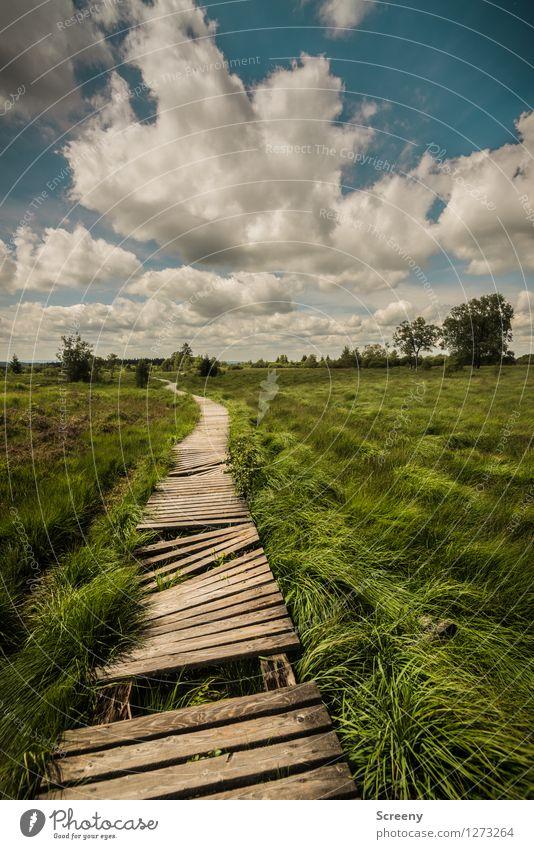 Hindernislauf Himmel Natur Ferien & Urlaub & Reisen blau Pflanze grün Sommer weiß Baum Landschaft ruhig Wolken Wege & Pfade Gras braun Tourismus
