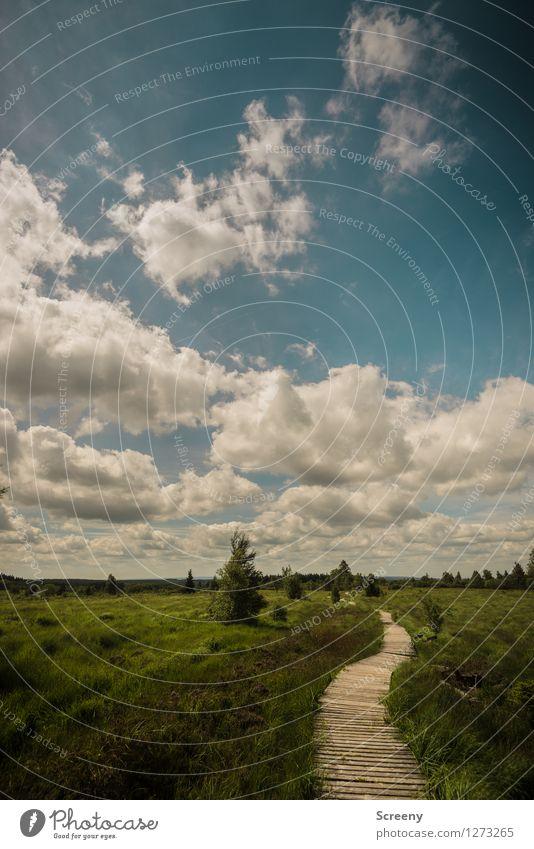 Hohes Venn Himmel Natur Ferien & Urlaub & Reisen blau Pflanze grün Sommer weiß Baum Landschaft ruhig Wolken Wiese Wege & Pfade Gras grau