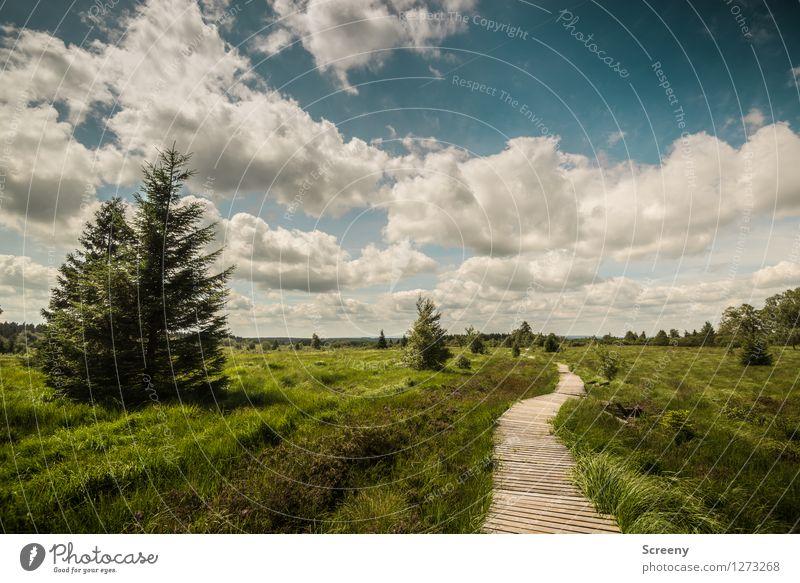 Wandern Ferien & Urlaub & Reisen Tourismus Ausflug wandern Natur Landschaft Pflanze Himmel Wolken Sonnenlicht Sommer Schönes Wetter Baum Gras Sträucher Wiese