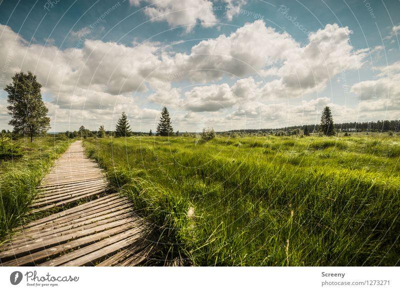 Weites Land Himmel Natur Ferien & Urlaub & Reisen blau Pflanze grün Sommer weiß Landschaft ruhig Wolken Wege & Pfade braun Tourismus Idylle wandern