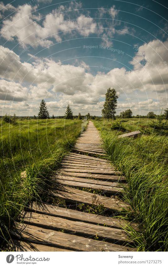 Verwittert... (#1) Himmel Natur Ferien & Urlaub & Reisen blau Pflanze grün Sommer weiß Baum Landschaft ruhig Wolken Wege & Pfade Gras braun Tourismus