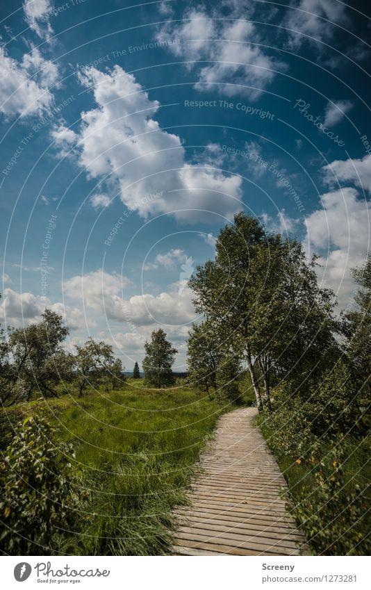 Hohes Venn Himmel Natur Ferien & Urlaub & Reisen blau Pflanze grün Sommer weiß Baum Landschaft ruhig Wolken Wege & Pfade Gras braun Tourismus
