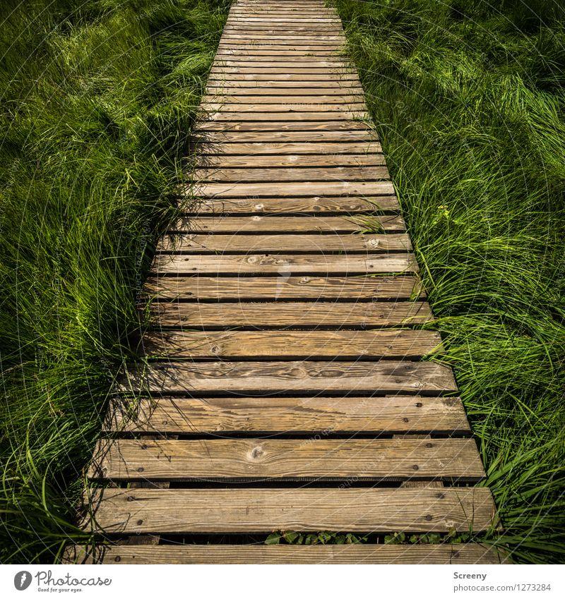 Mitten durch... (#4) Natur Ferien & Urlaub & Reisen Pflanze grün Sommer Landschaft Wege & Pfade Gras Holz braun Tourismus wandern Ausflug Schönes Wetter