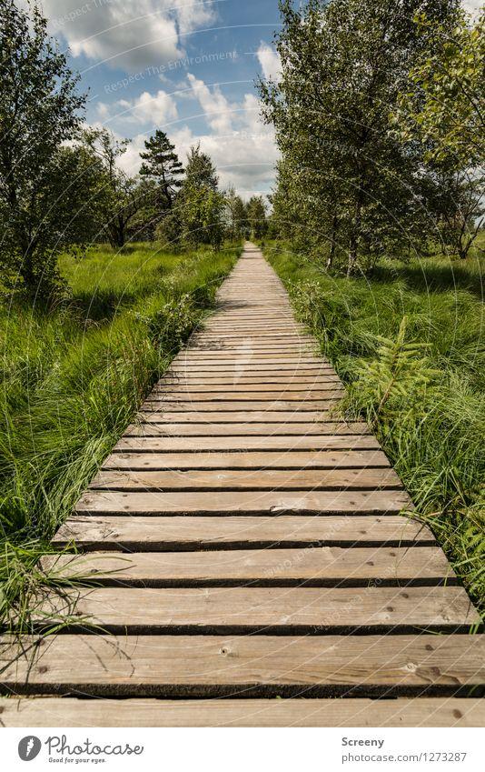 Mitten durch... (#2) Himmel Natur Ferien & Urlaub & Reisen blau Pflanze grün Sommer weiß Baum Landschaft ruhig Wolken Wiese Wege & Pfade Gras Holz