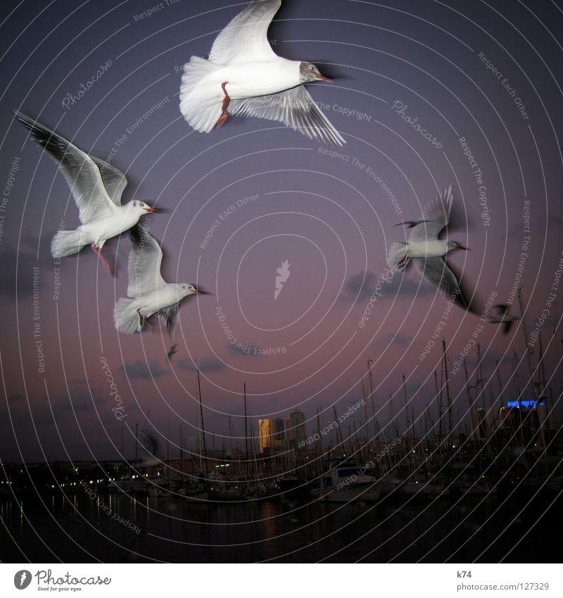 AUSFLUG Sportboot Segelschiff Meer Vogel Sonnenuntergang Hochhaus Luft Himmel Wolken Portwein violett zurück wiederkommen Beginn Schweben Hafen Jacht Möve
