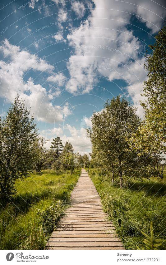 Mitten durch... (#1) Himmel Natur Ferien & Urlaub & Reisen blau Pflanze grün Sommer weiß Baum Landschaft ruhig Wolken Wiese Wege & Pfade Gras Holz