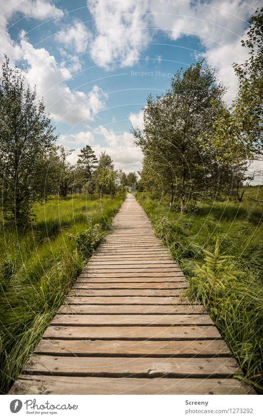 Mitten durch... (#3) Himmel Natur Ferien & Urlaub & Reisen blau Pflanze grün Sommer weiß Baum Landschaft ruhig Wolken Wiese Wege & Pfade Gras Holz
