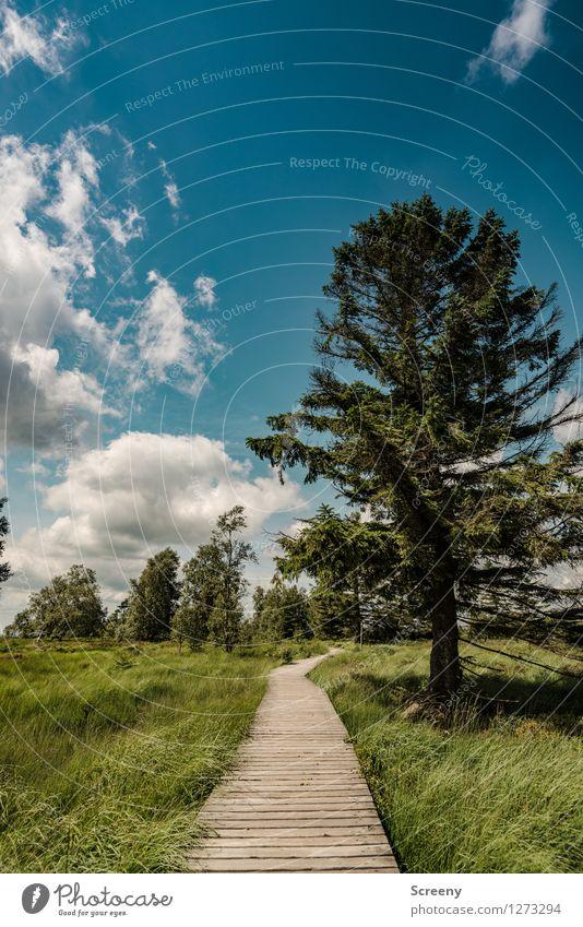 Hohes Venn Himmel Natur Ferien & Urlaub & Reisen blau Pflanze grün Sommer Baum Landschaft ruhig Wolken Wiese Wege & Pfade Gras Holz braun