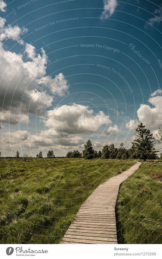 Hinter den Bäumen geht's weiter... Himmel Natur Ferien & Urlaub & Reisen blau Pflanze grün Sommer weiß Baum Landschaft ruhig Wolken Gras Wege & Pfade braun