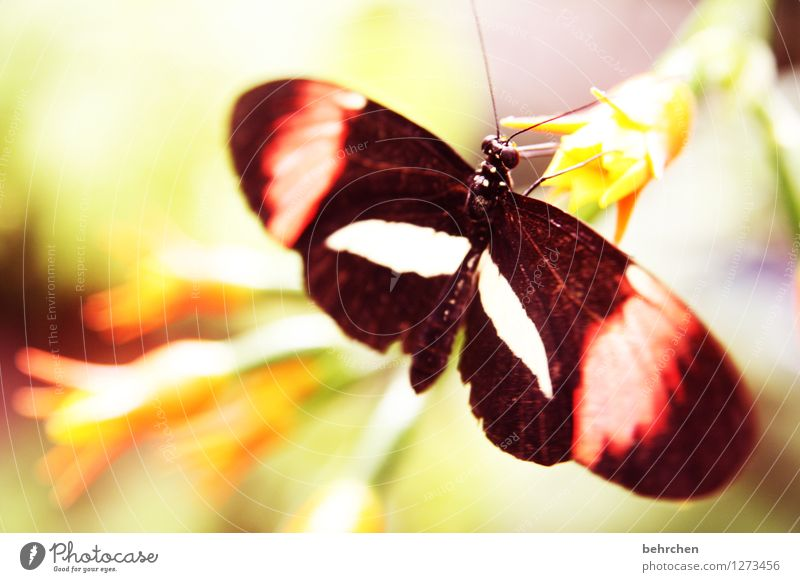 5 cm spannweite Natur Pflanze Tier Frühling Sommer Schönes Wetter Blume Blatt Blüte Garten Park Wiese Wildtier Schmetterling Tiergesicht Flügel 1 Blühend Duft