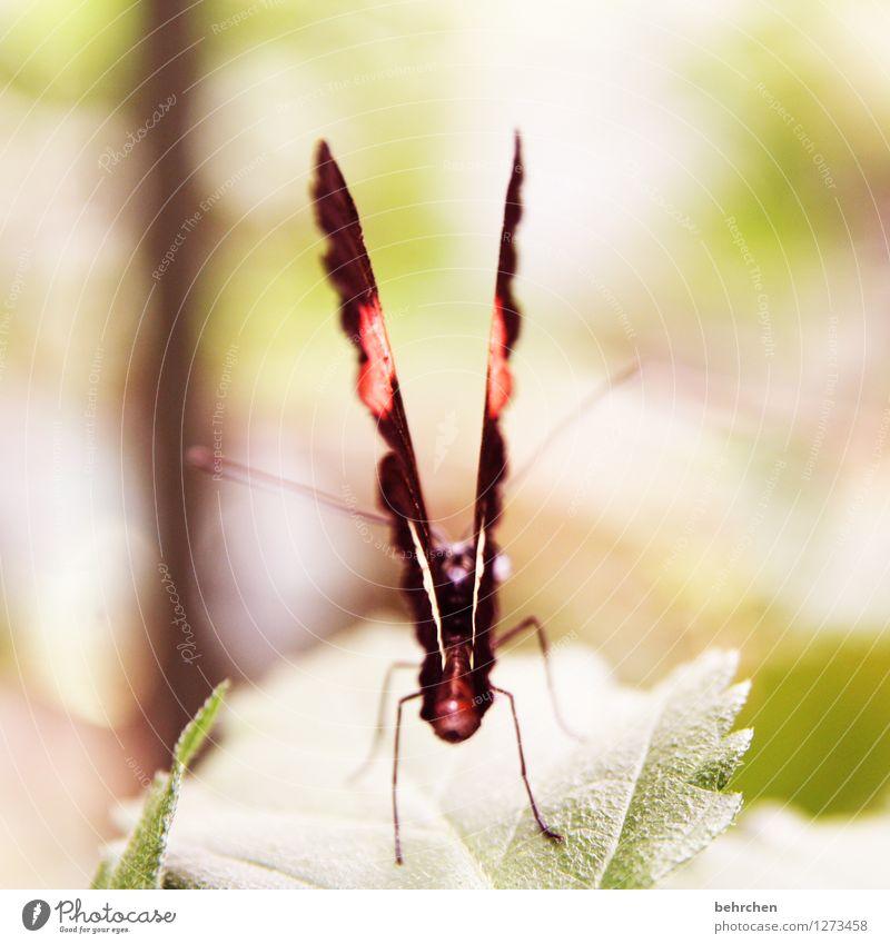 montag am arsch! grün schön Blatt Tier außergewöhnlich fliegen Beine braun orange Wildtier sitzen Flügel beobachten schlafen Schmetterling exotisch