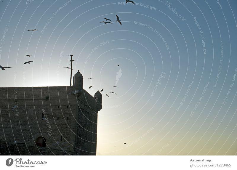 Festung I Umwelt Natur Himmel Wolkenloser Himmel Sonne Sonnenaufgang Sonnenuntergang Sonnenlicht Sommer Wetter Schönes Wetter Essaouira Stadt Hafenstadt