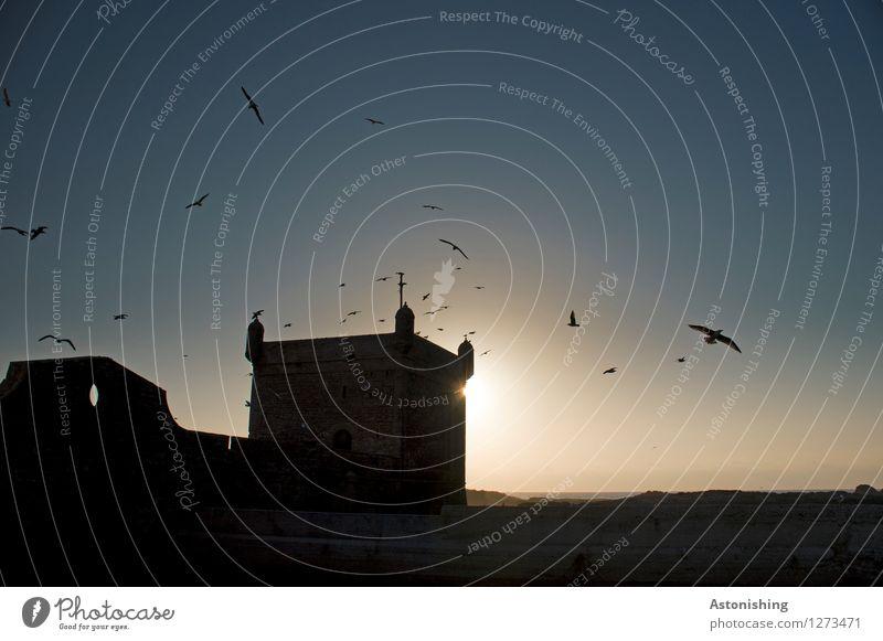 Festung III Umwelt Natur Tier Himmel Wolkenloser Himmel Sonne Sonnenaufgang Sonnenuntergang Sonnenlicht Sommer Wetter Schönes Wetter Wärme Essaouira Marokko