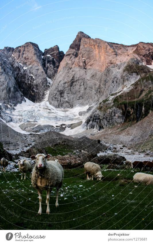 Pyrenäen-Wanderweg 3 Natur Ferien & Urlaub & Reisen Pflanze Sommer Landschaft Tier Ferne Berge u. Gebirge Umwelt Gefühle Wiese Freiheit Felsen Tourismus wandern