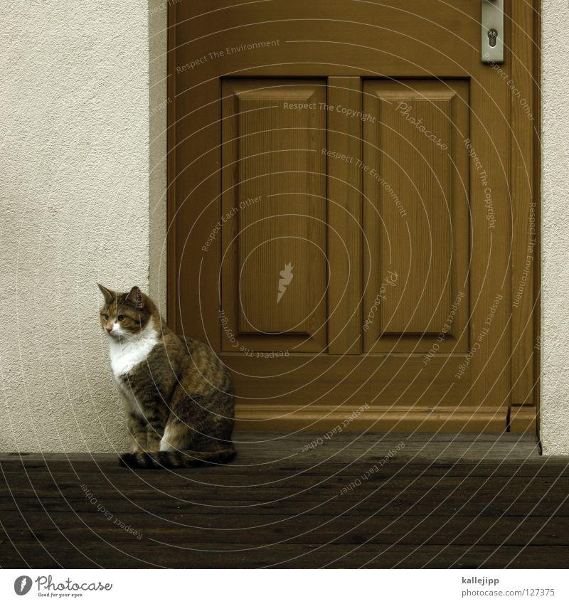 warten auf den milchmann Katze Mensch weiß Tier Haus gelb braun Tür Wohnung Wildtier Streifen Jagd Eingang Fressen Säugetier