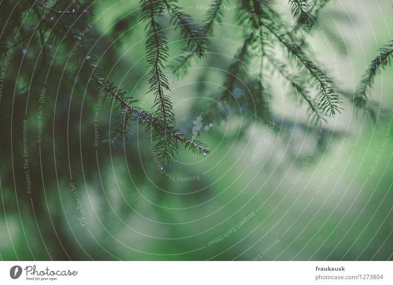 Nach dem Regen Umwelt Natur Landschaft Sommer Grünpflanze Wald Leichtigkeit Gedeckte Farben Außenaufnahme abstrakt Tag Vogelperspektive