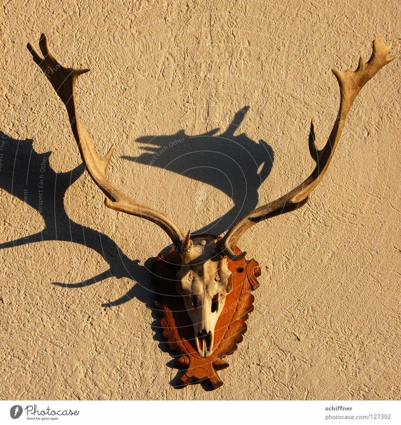 Dead Jägermeister Horn Kopfschmuck Damwild Hirsche Hirschgulasch Skelett Schatten Wand hängen Stimmung Säugetier Wanddekoration Achtender Jagd Jagdglück Förster