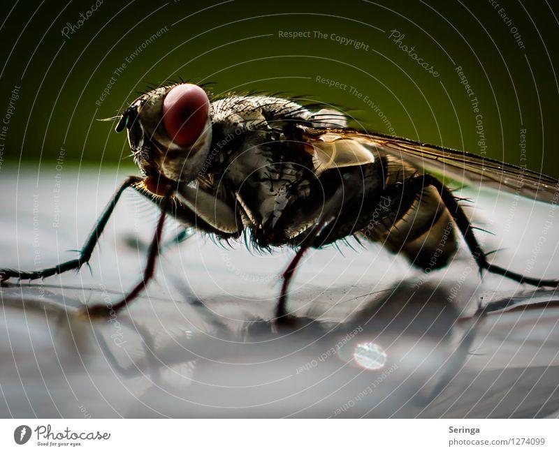 Schau mich an Natur Pflanze Tier Garten Park Wiese Fliege Tiergesicht Flügel 1 fliegen Insekt Farbfoto mehrfarbig Außenaufnahme Nahaufnahme Detailaufnahme