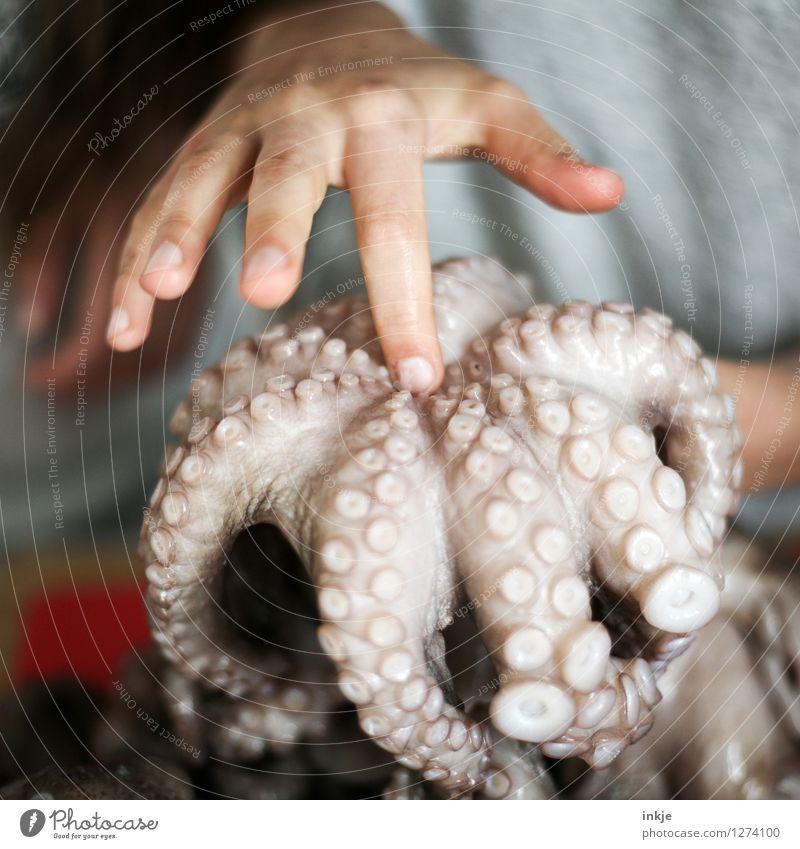 Oktopus 3 Lebensmittel Meeresfrüchte Ernährung Lifestyle Kind Kindheit Jugendliche Hand Finger 1 Mensch Wildtier Totes Tier oktopus Kraken Tintenfisch Saugnapf