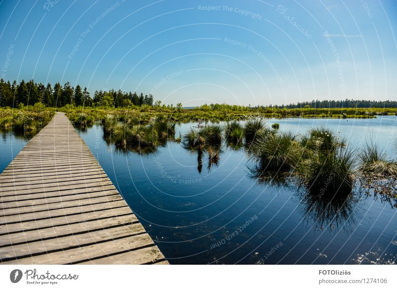 Hohes Venn Umwelt Natur Landschaft Pflanze Wasser Himmel Wolkenloser Himmel Sommer Schönes Wetter Gras Sträucher Moor Sumpf Steg fantastisch schön blau grün