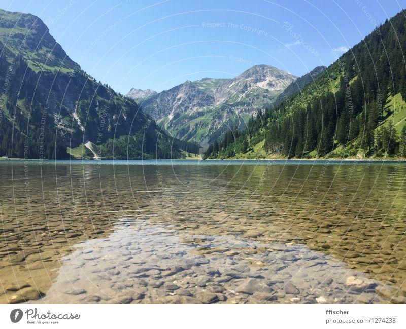 Vilsalpsee Natur Landschaft Urelemente Wasser Himmel Wolkenloser Himmel Sonne Sommer Wetter Schönes Wetter Baum Wald Alpen Berge u. Gebirge Seeufer Bergsee