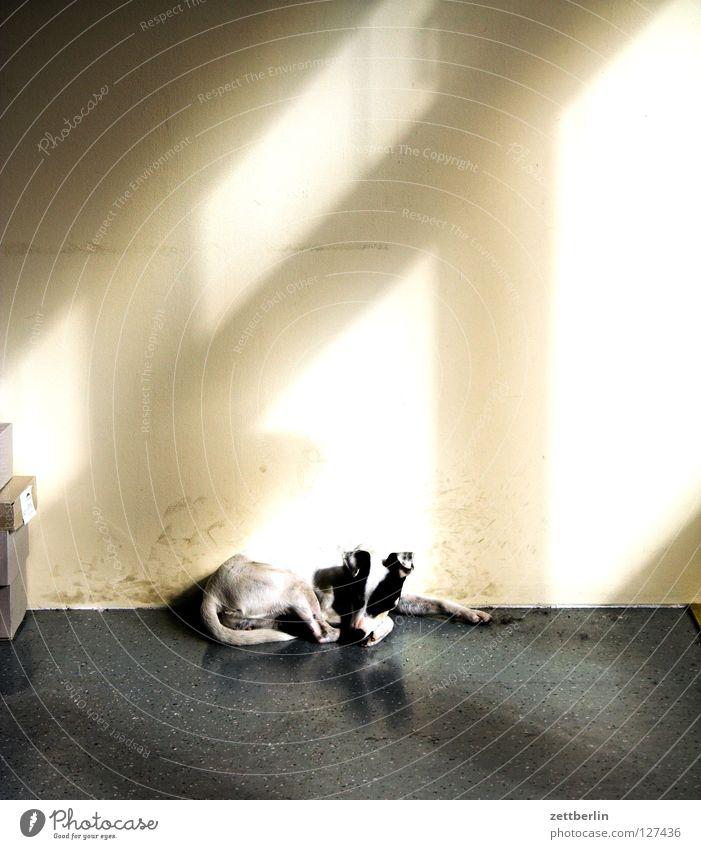 Hund Fenster Raum leer verfallen Umzug (Wohnungswechsel) Langeweile Säugetier Versicherung Lichteinfall Postbote Fensterkreuz Haushund
