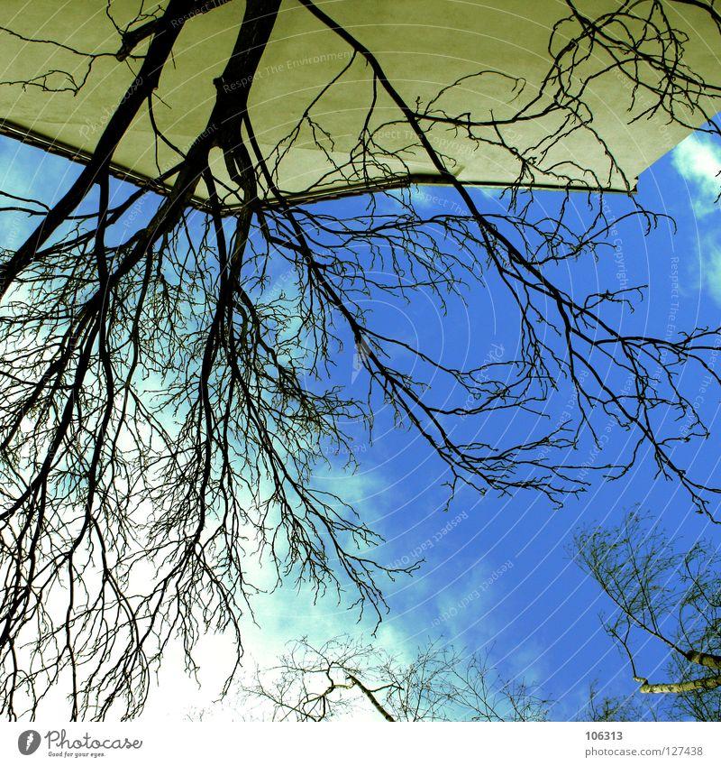 MEIN BESTES Himmel Natur blau Baum Wolken Haus gelb kalt groß Wachstum Perspektive Coolness gut Macht Sträucher Ast