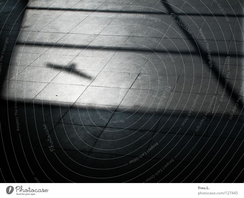 Schattenvogel Fenster Bodenbelag Sonnenlicht Vogel Fensterscheibe Folie U-Bahn Glasscheibe unterirdisch Bahnhof Raum Lagerhalle Fliesen u. Kacheln aufgeklebt