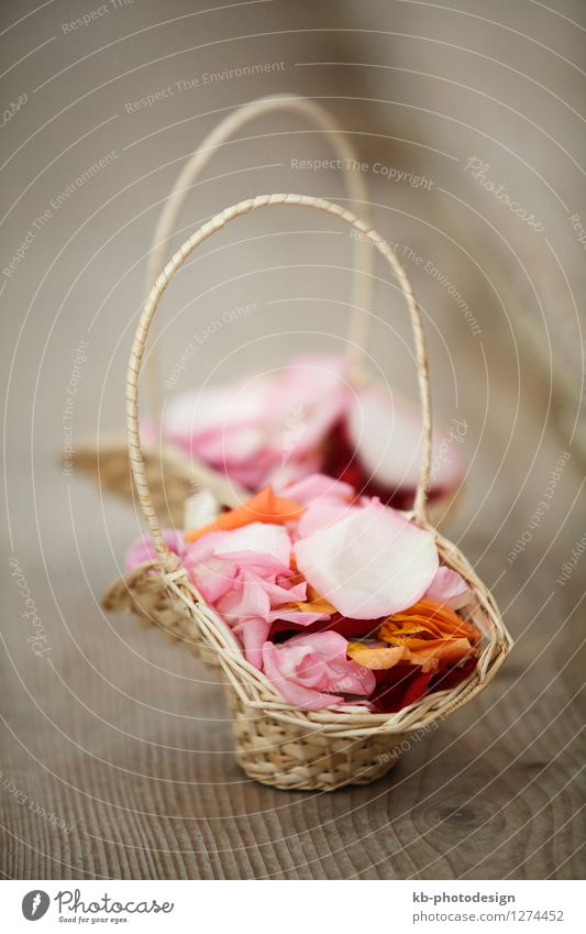 Colorful flower basket for wedding Pflanze Blume Blatt Blüte Gefühle Feste & Feiern Hochzeit Rose