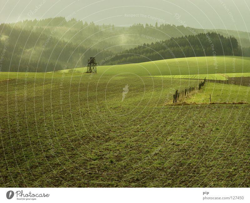 grünland Feld Wiese Gras Grünstich Weide Aussaat Pflanze ruhig harmonisch Zaun Barriere Grenze Wald Blatt Holz Schonung Nadelwald Urwald Wäldchen Nebel