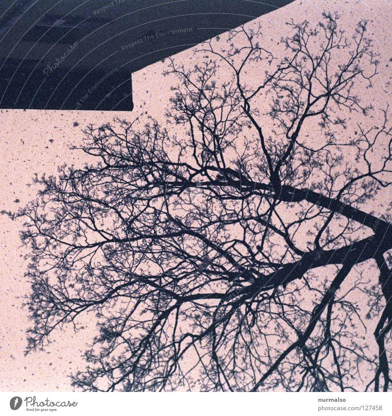 Baumhausschnee Himmel Winter Haus Ferne Wand Spielen oben Architektur träumen Schneefall Beginn Perspektive Ecke trist Dach