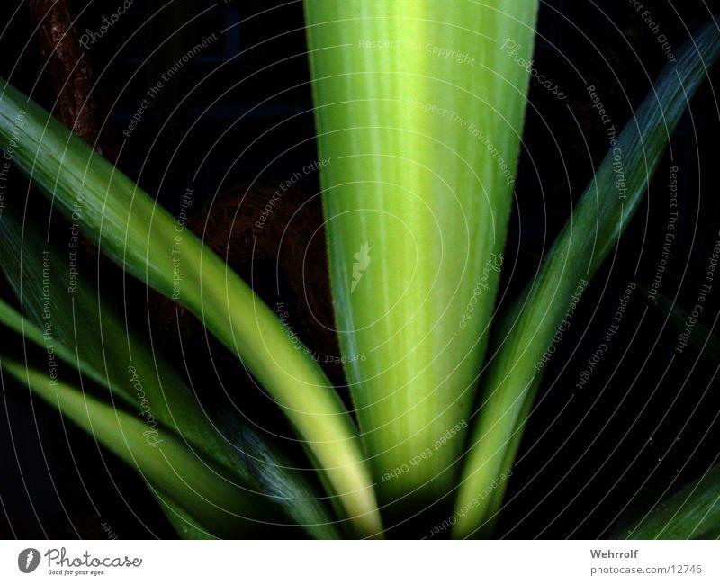 Palm(e)-Top Palme grün Blatt
