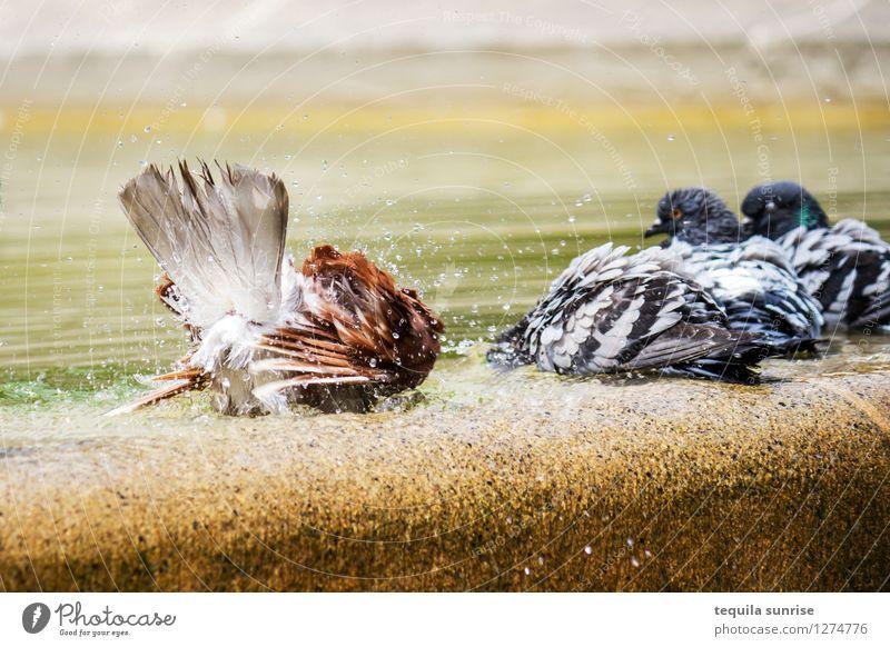 Waschtag Wasser Barcelona Stadtzentrum Brunnen Vogel Taube Tiergruppe dreckig Sauberkeit Waschen Farbfoto Menschenleer Tag