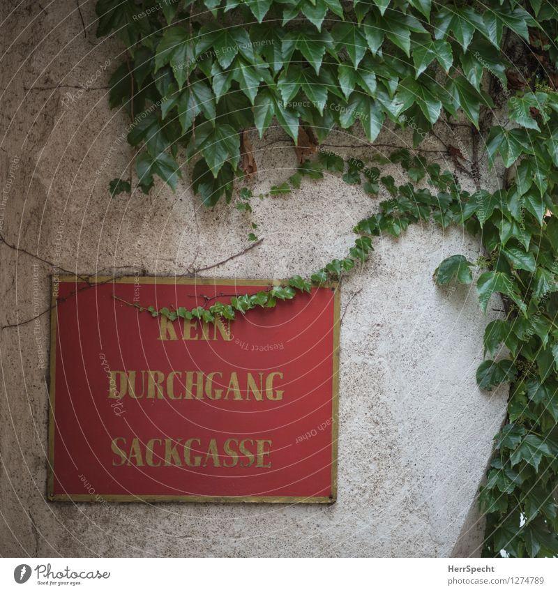Bewachsen Dorf Kleinstadt Altstadt Bauwerk Gebäude Mauer Wand Fassade Schriftzeichen Schilder & Markierungen Hinweisschild Warnschild natürlich grün rot