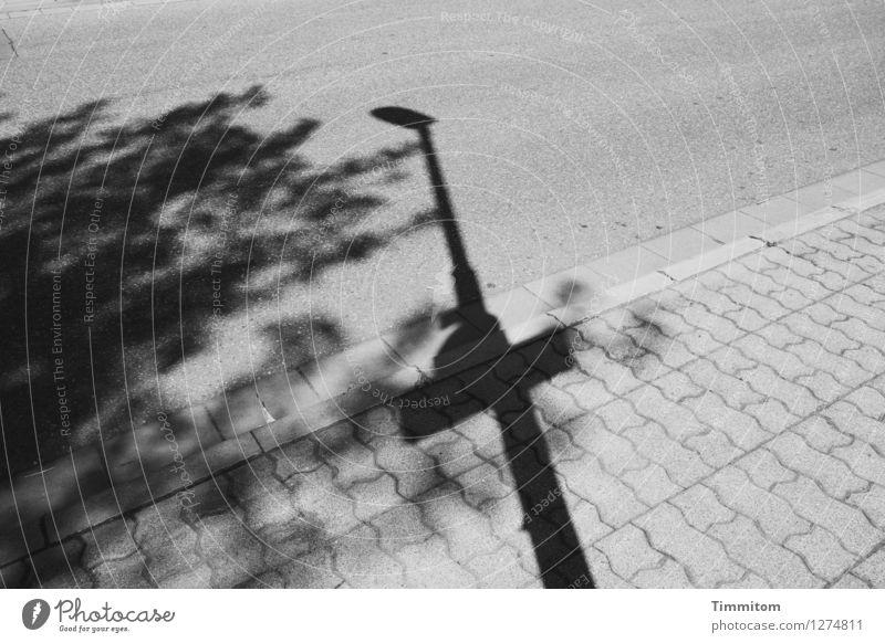 Karl überlegt. Ausflug Baum Straße Bordsteinkante Bürgersteig Pflastersteine Stein Linie ästhetisch einfach grau schwarz Gefühle unsicher Irritation
