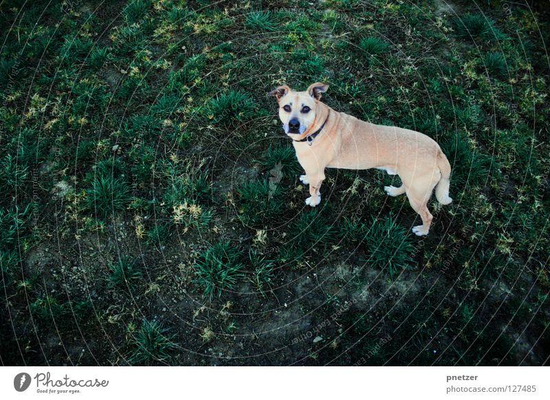 Na guck mal! Freude Tier Wiese oben Gras Hund Vogel Feld Perspektive Säugetier Haustier Labrador Mischling