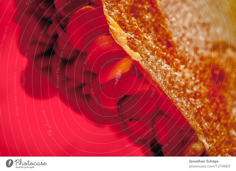 Die Paprika II rot Gesunde Ernährung Speise Essen Foodfotografie Gesundheit Lebensmittel ästhetisch Innerhalb (Position) nah Gemüse Bioprodukte