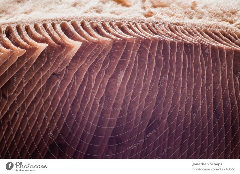 Der Pilz Gesunde Ernährung Essen Foodfotografie klein Lebensmittel braun ästhetisch genießen Kochen & Garen & Backen Streifen lecker entdecken Bioprodukte eckig