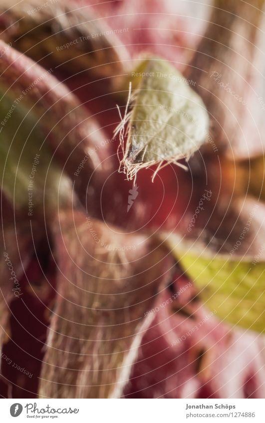 raaaaten Sie mal! IV Lebensmittel Ernährung Essen Frühstück Bioprodukte Vegetarische Ernährung ästhetisch Frucht Erdbeeren Blatt Makroaufnahme vitaminreich