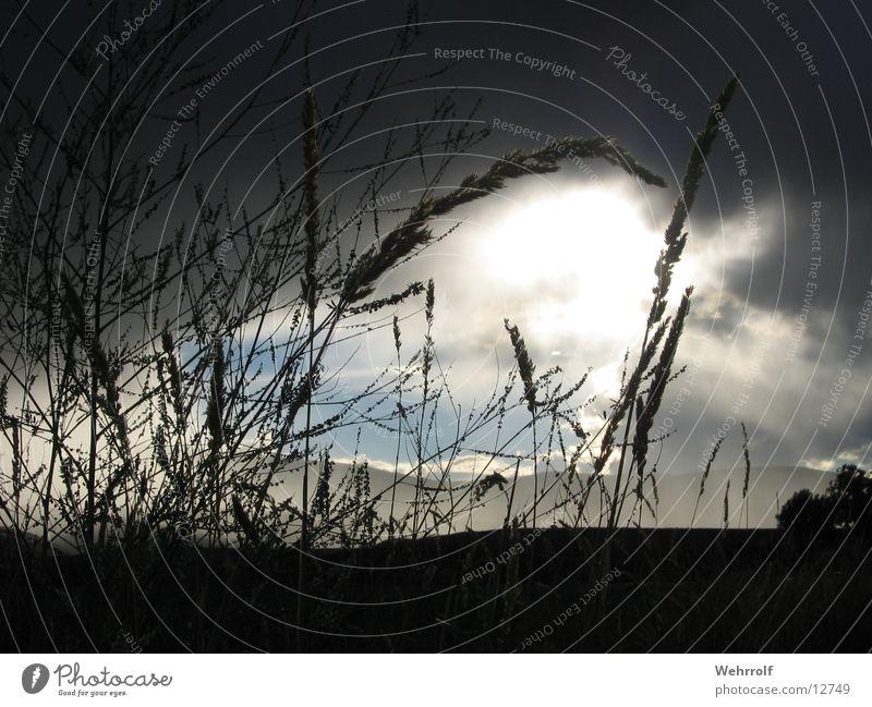 Wolkenlücke Gras Licht Halm Himmel Schatten Lichtblick Wolkenloch Regenwolken Silhouette Menschenleer Wolkenhimmel Wolkendecke durchscheinend Sonnenlicht
