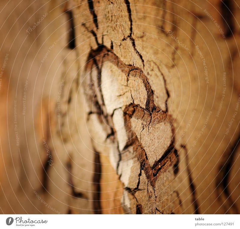 Liebe Baum Freude Gefühle Holz Glück Paar träumen Zusammensein Herz Zukunft paarweise Hoffnung Zeichen Baumstamm Vertrauen