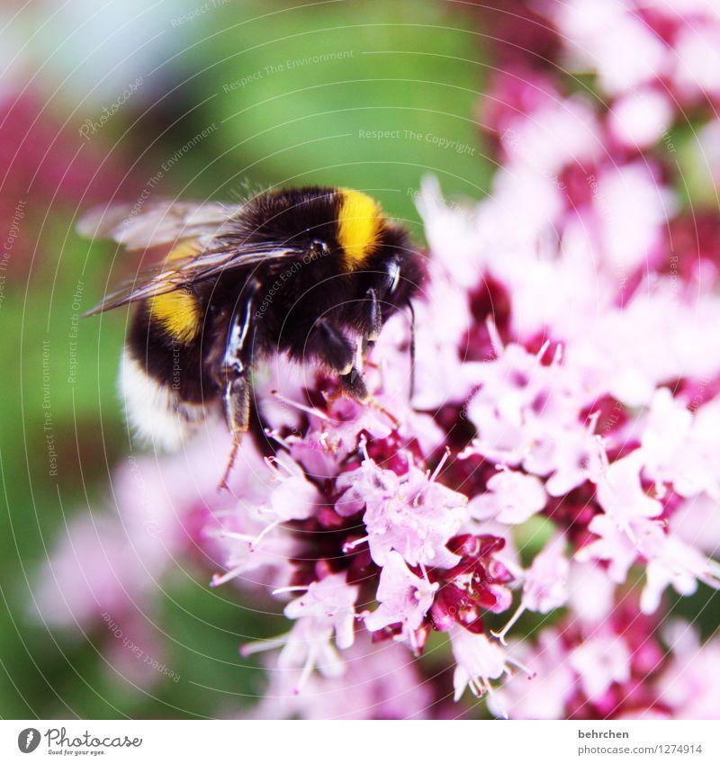 middach Natur Pflanze schön Sommer Blume Blatt Tier Frühling Blüte Wiese Garten fliegen rosa Park Feld Wildtier