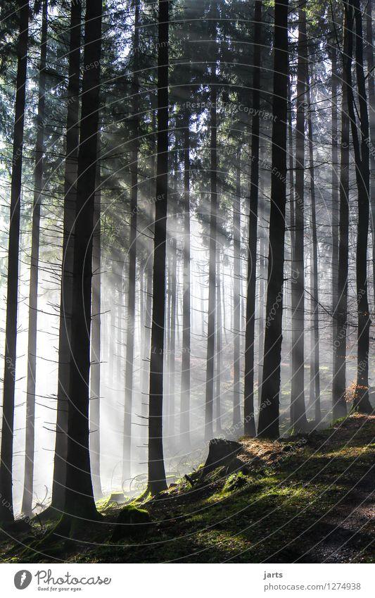 von Anfang an Natur Baum Landschaft ruhig Wald natürlich Wege & Pfade hell frisch Kraft frei ästhetisch Schönes Wetter Hoffnung Gelassenheit Optimismus