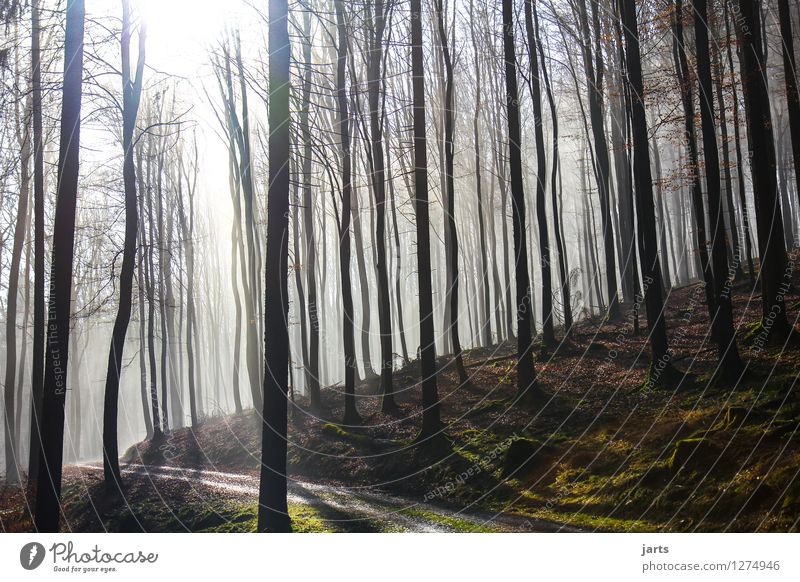 willkommen im wald Umwelt Natur Landschaft Pflanze Sonnenaufgang Sonnenuntergang Sonnenlicht Frühling Herbst Schönes Wetter Baum Wald frisch glänzend hell