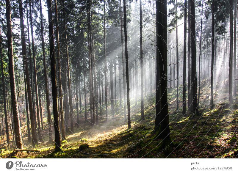 neuer tag Umwelt Natur Landschaft Pflanze Sonnenaufgang Sonnenuntergang Sonnenlicht Frühling Herbst Schönes Wetter Baum Gras Wald fantastisch frisch glänzend